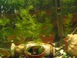 аквариум на 120 литров